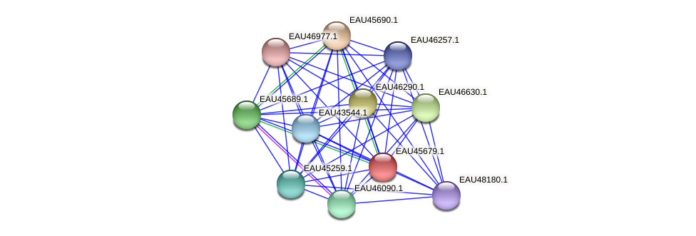 R2601_09028 protein (Pelagibaca bermudensis) - STRING interaction network