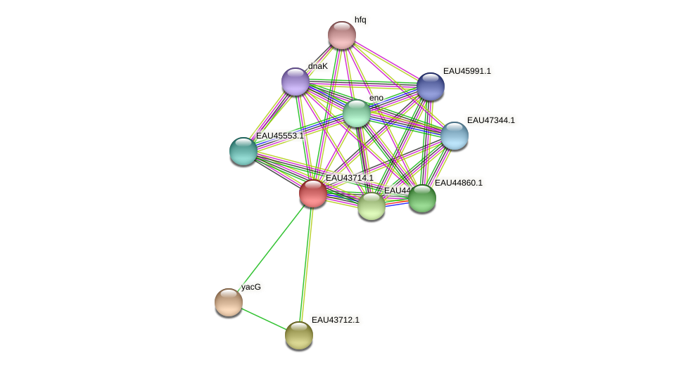 R2601_09320 protein (Pelagibaca bermudensis) - STRING interaction network