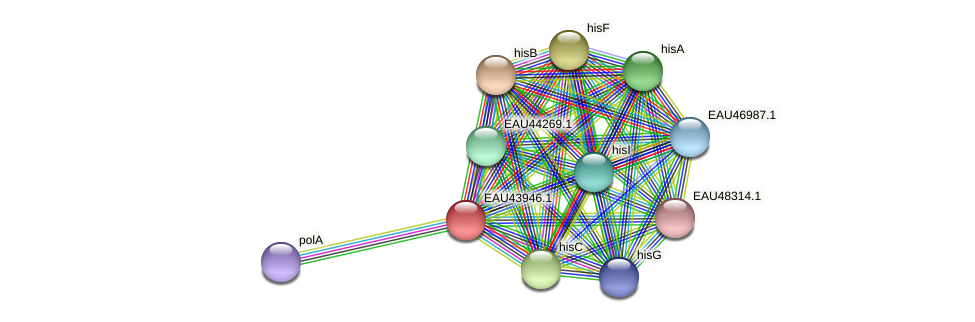 R2601_09365 protein (Pelagibaca bermudensis) - STRING interaction network