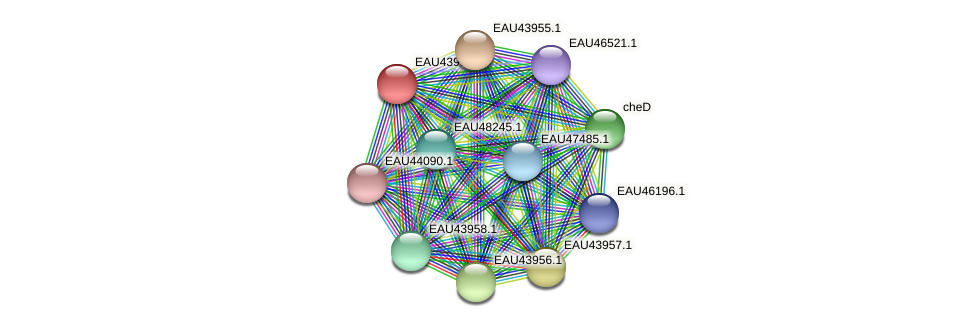 R2601_09435 protein (Pelagibaca bermudensis) - STRING interaction network