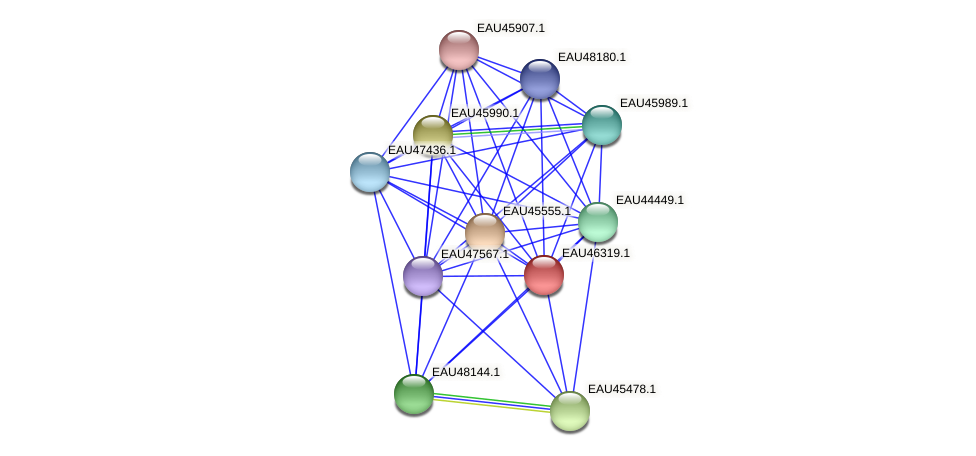 R2601_09697 protein (Pelagibaca bermudensis) - STRING interaction network