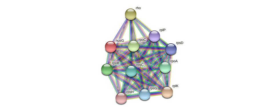 nusG protein (Pelagibaca bermudensis) - STRING interaction network