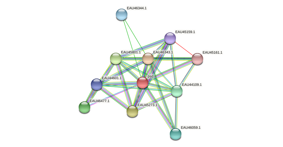 psd protein (Pelagibaca bermudensis) - STRING interaction network
