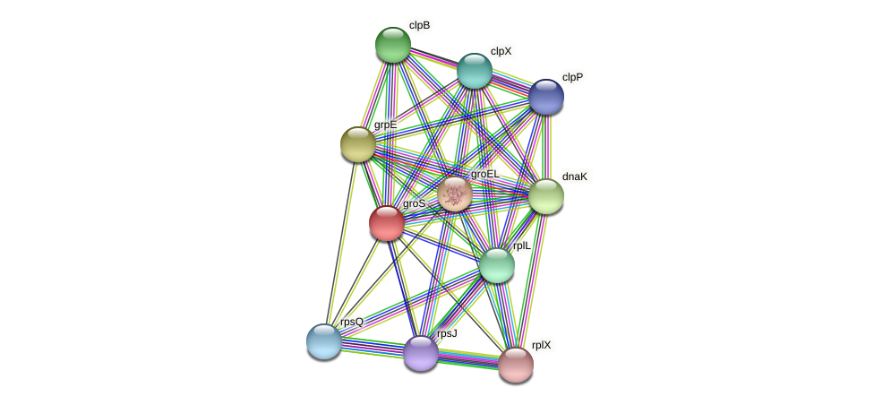 groS protein (Pelagibaca bermudensis) - STRING interaction network
