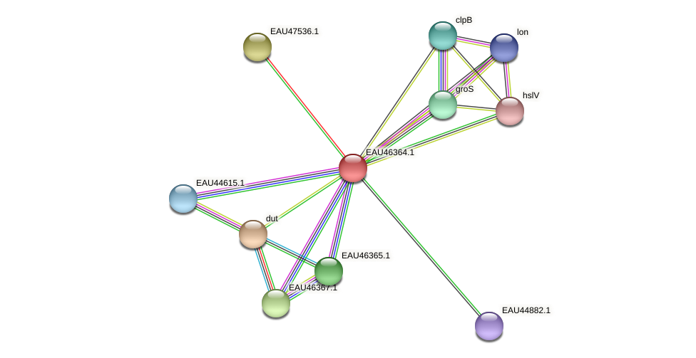 R2601_09922 protein (Pelagibaca bermudensis) - STRING interaction network