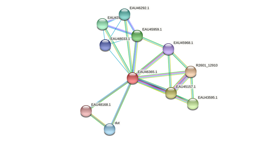 R2601_09927 protein (Pelagibaca bermudensis) - STRING interaction network