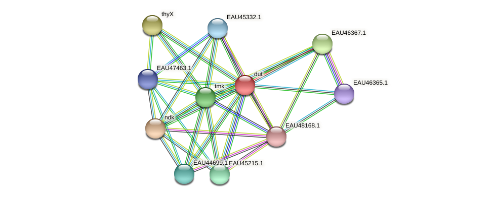 R2601_09932 protein (Pelagibaca bermudensis) - STRING interaction network