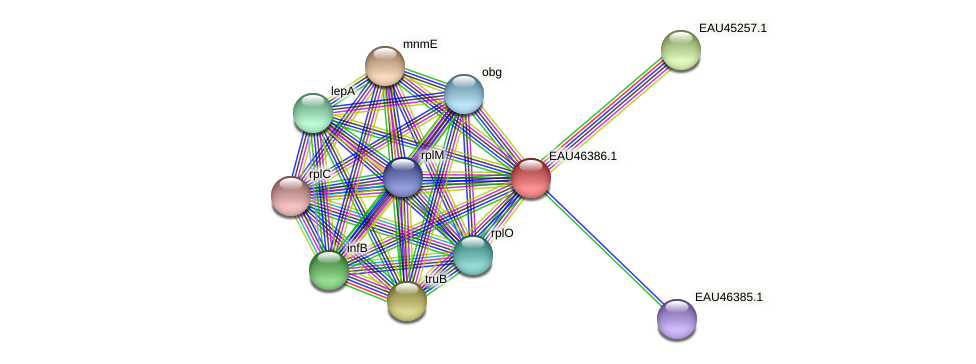 R2601_10032 protein (Pelagibaca bermudensis) - STRING interaction network