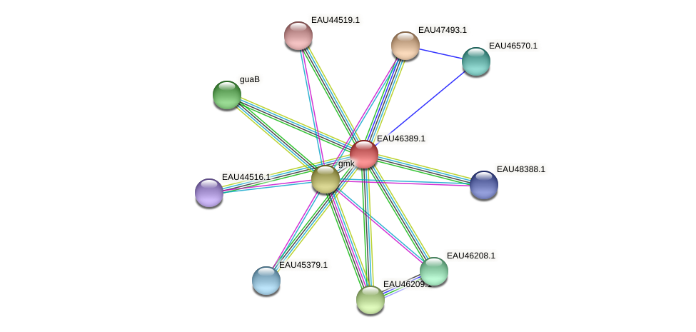 R2601_10047 protein (Pelagibaca bermudensis) - STRING interaction network