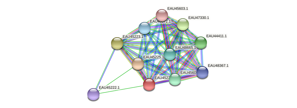 R2601_10354 protein (Pelagibaca bermudensis) - STRING interaction network