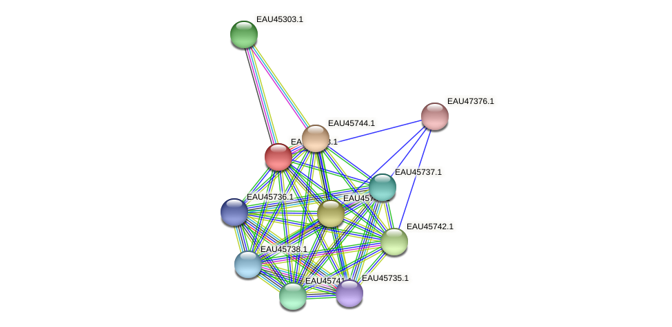 R2601_10579 protein (Pelagibaca bermudensis) - STRING interaction network