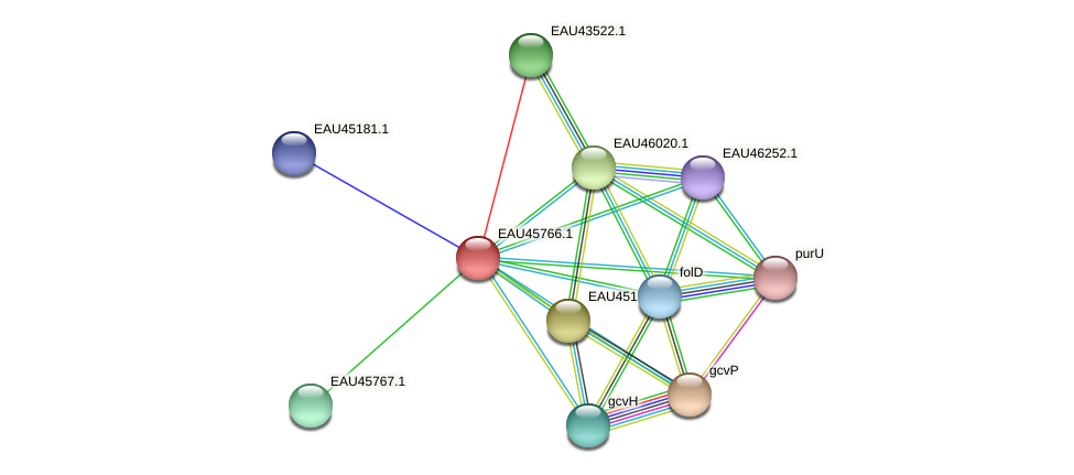 R2601_10694 protein (Pelagibaca bermudensis) - STRING interaction network