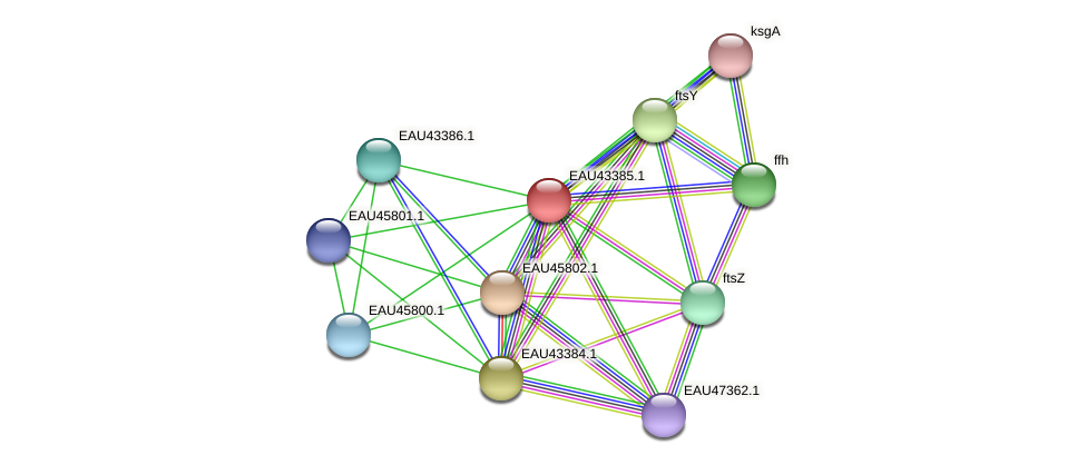 R2601_10884 protein (Pelagibaca bermudensis) - STRING interaction network
