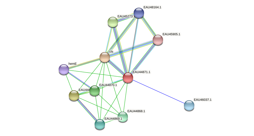 R2601_11064 protein (Pelagibaca bermudensis) - STRING interaction network