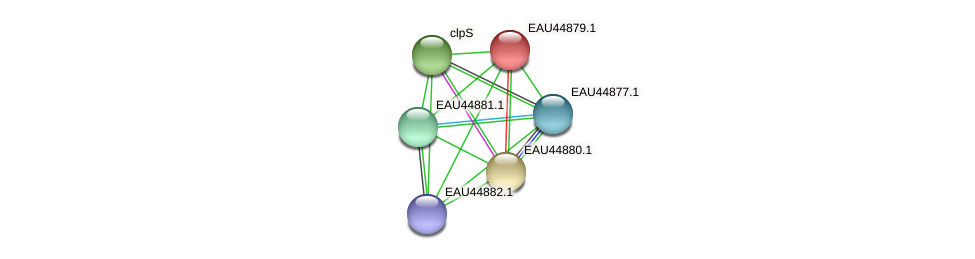 R2601_11104 protein (Pelagibaca bermudensis) - STRING interaction network