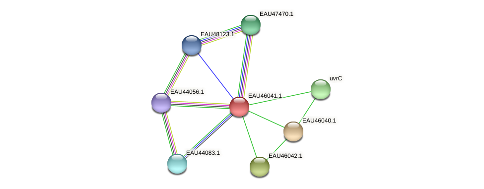 R2601_11239 protein (Pelagibaca bermudensis) - STRING interaction network