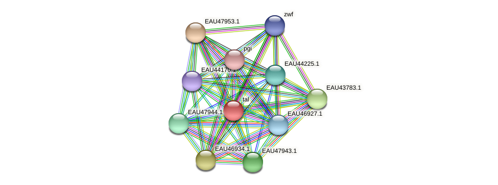 tal protein (Pelagibaca bermudensis) - STRING interaction network