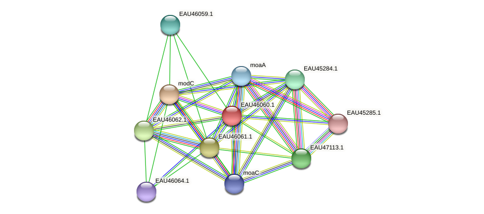 R2601_11334 protein (Pelagibaca bermudensis) - STRING interaction network