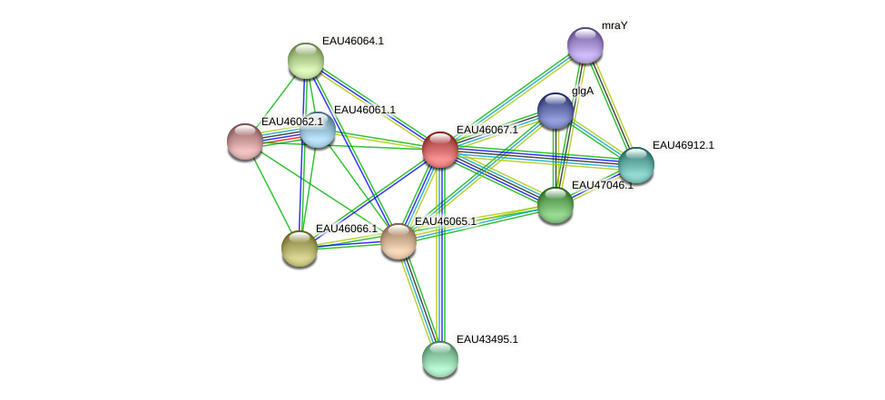 R2601_11369 protein (Pelagibaca bermudensis) - STRING interaction network