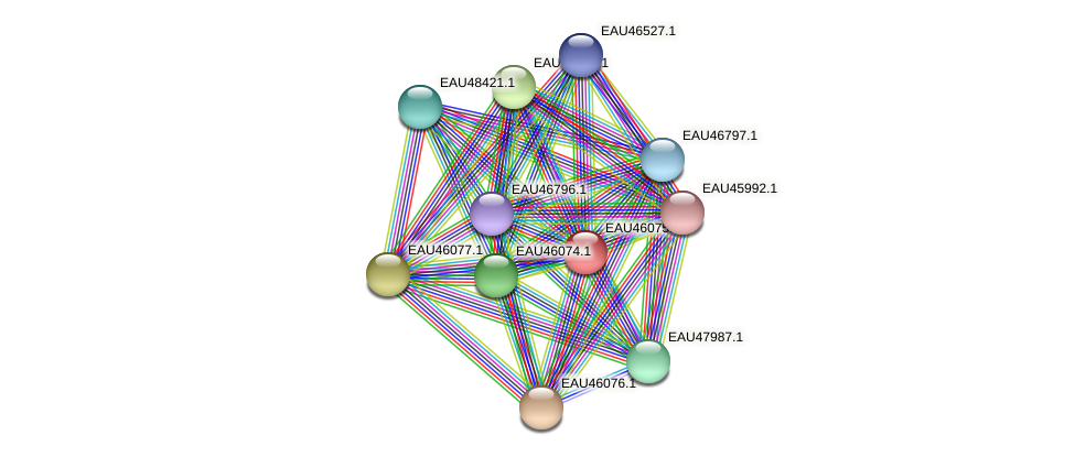 R2601_11409 protein (Pelagibaca bermudensis) - STRING interaction network
