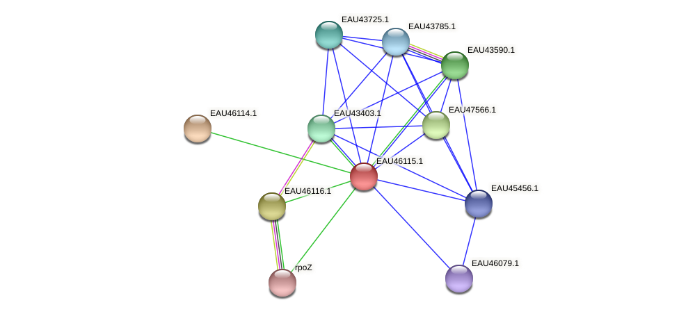 R2601_11609 protein (Pelagibaca bermudensis) - STRING interaction network