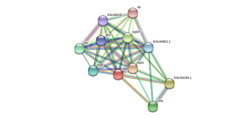 ispH protein (Pelagibaca bermudensis) - STRING interaction network