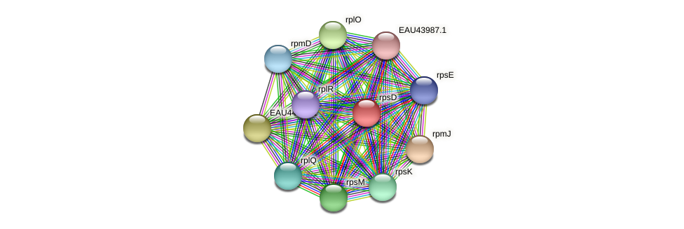 rpsD protein (Pelagibaca bermudensis) - STRING interaction network