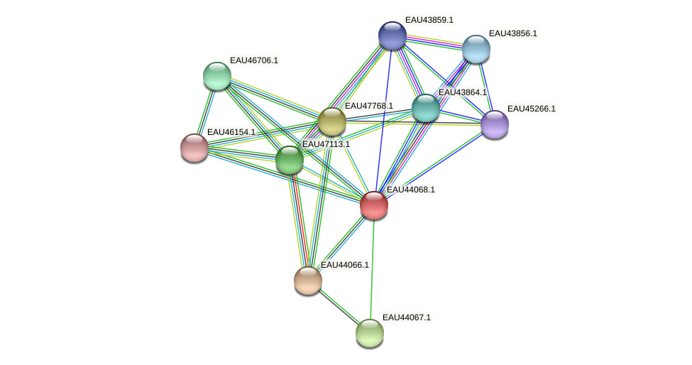 R2601_11971 protein (Pelagibaca bermudensis) - STRING interaction network