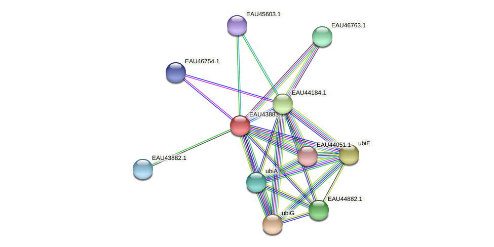 R2601_11996 protein (Pelagibaca bermudensis) - STRING interaction network