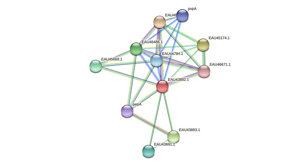 R2601_12041 protein (Pelagibaca bermudensis) - STRING interaction network