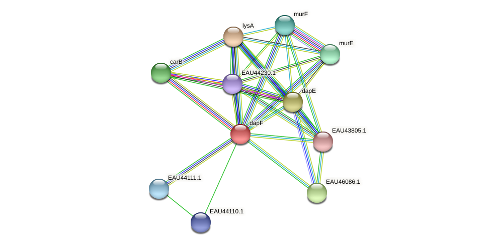 dapF protein (Pelagibaca bermudensis) - STRING interaction network