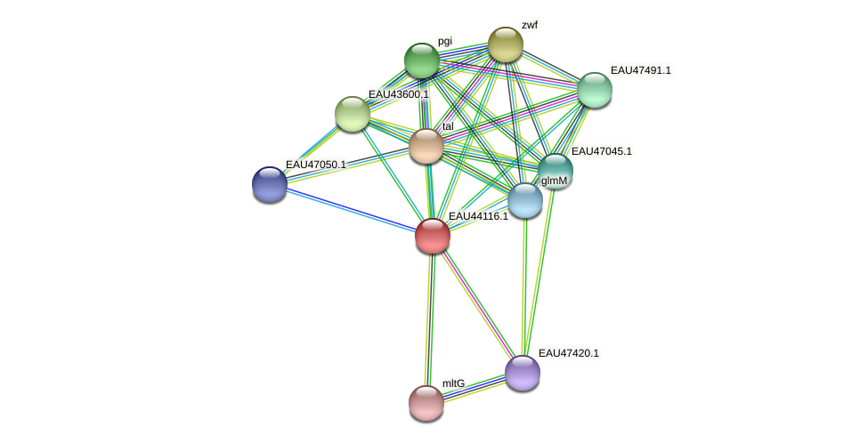 R2601_12176 protein (Pelagibaca bermudensis) - STRING interaction network