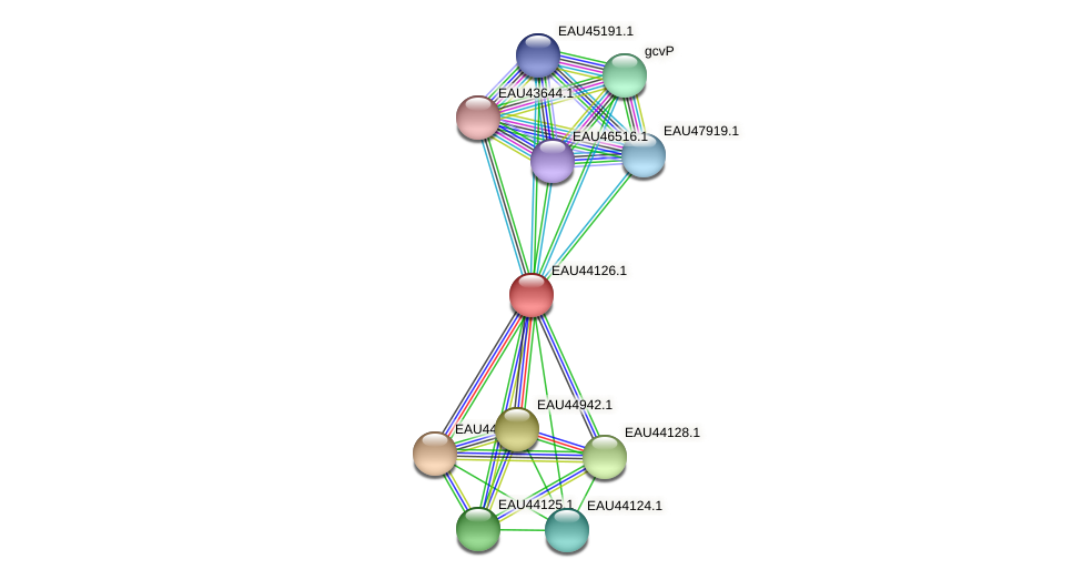 R2601_12226 protein (Pelagibaca bermudensis) - STRING interaction network