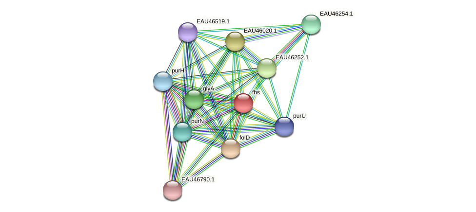 fhs protein (Pelagibaca bermudensis) - STRING interaction network