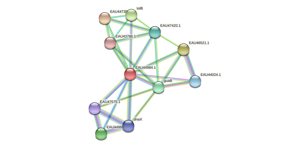 R2601_12453 protein (Pelagibaca bermudensis) - STRING interaction network