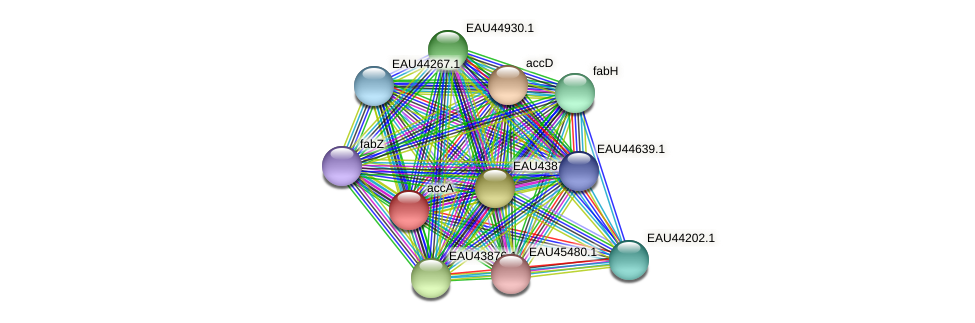 accA protein (Pelagibaca bermudensis) - STRING interaction network