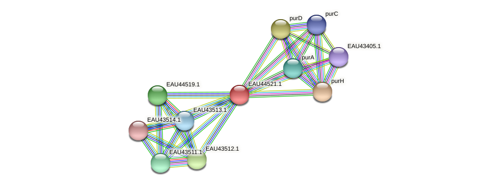 R2601_12625 protein (Pelagibaca bermudensis) - STRING interaction network