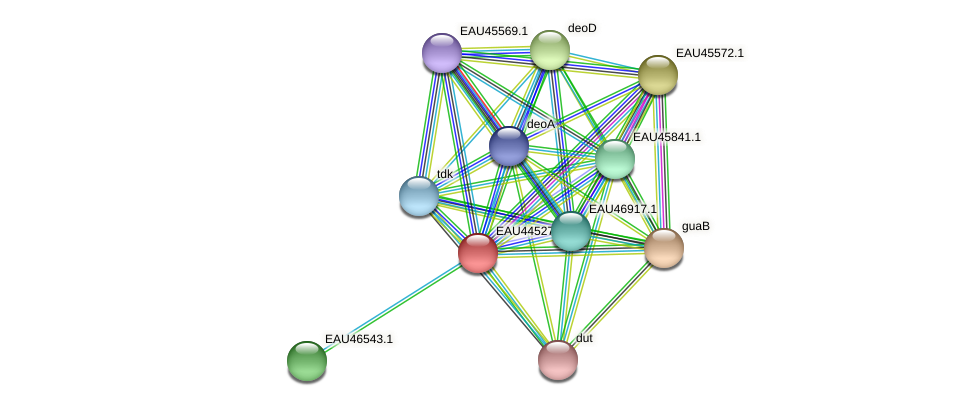 R2601_12655 protein (Pelagibaca bermudensis) - STRING interaction network