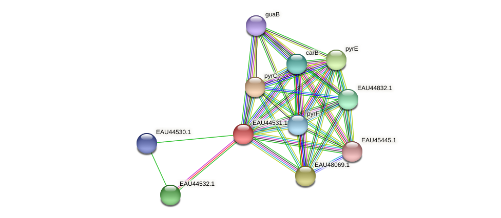 R2601_12675 protein (Pelagibaca bermudensis) - STRING interaction network