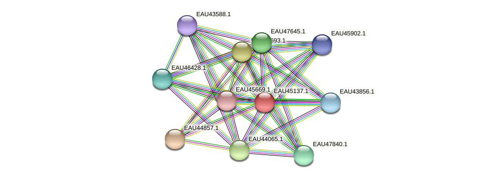 R2601_12805 protein (Pelagibaca bermudensis) - STRING interaction network