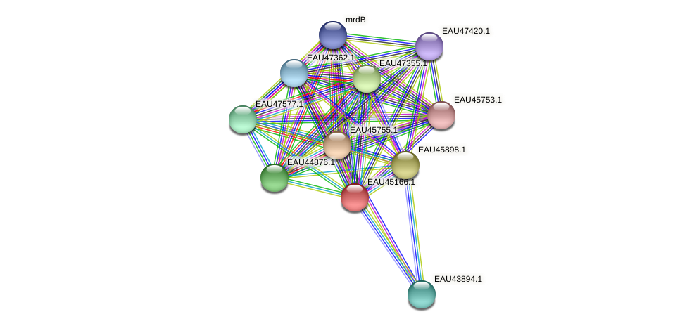 R2601_12950 protein (Pelagibaca bermudensis) - STRING interaction network