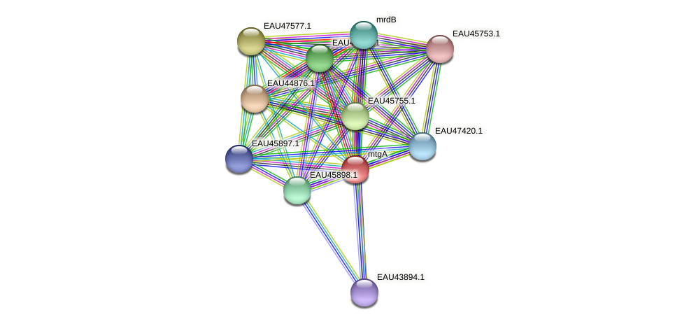 R2601_12995 protein (Pelagibaca bermudensis) - STRING interaction network