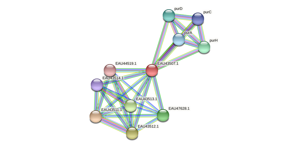 R2601_13104 protein (Pelagibaca bermudensis) - STRING interaction network