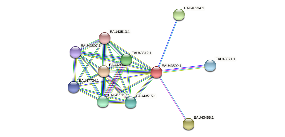 R2601_13114 protein (Pelagibaca bermudensis) - STRING interaction network