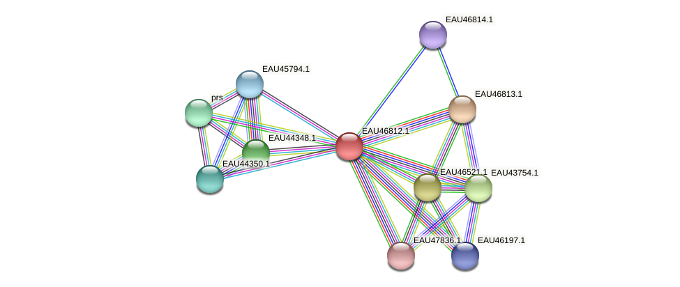 R2601_13359 protein (Pelagibaca bermudensis) - STRING interaction network