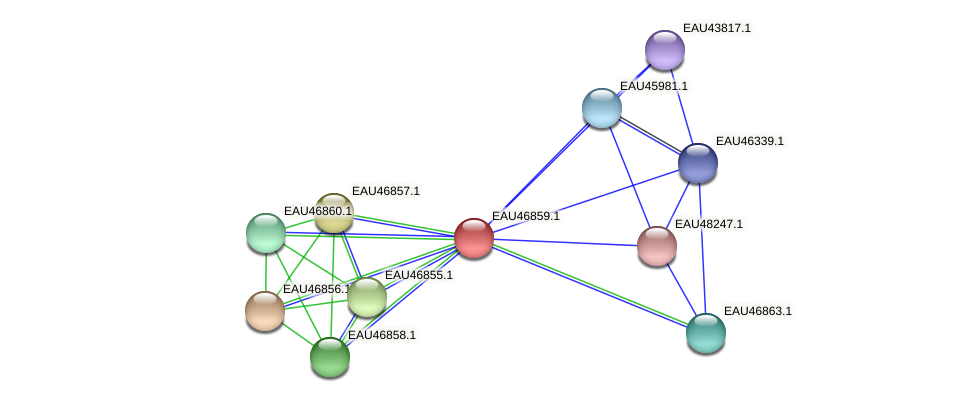 R2601_13594 protein (Pelagibaca bermudensis) - STRING interaction network