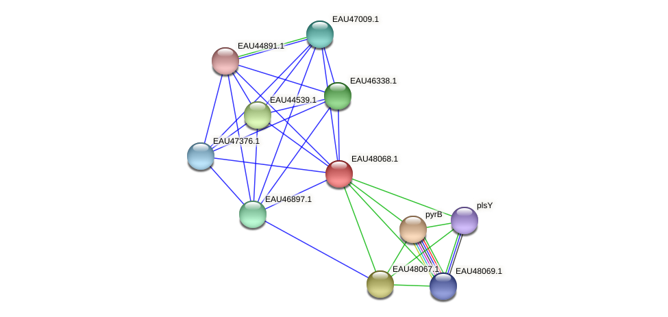 R2601_13920 protein (Pelagibaca bermudensis) - STRING interaction network