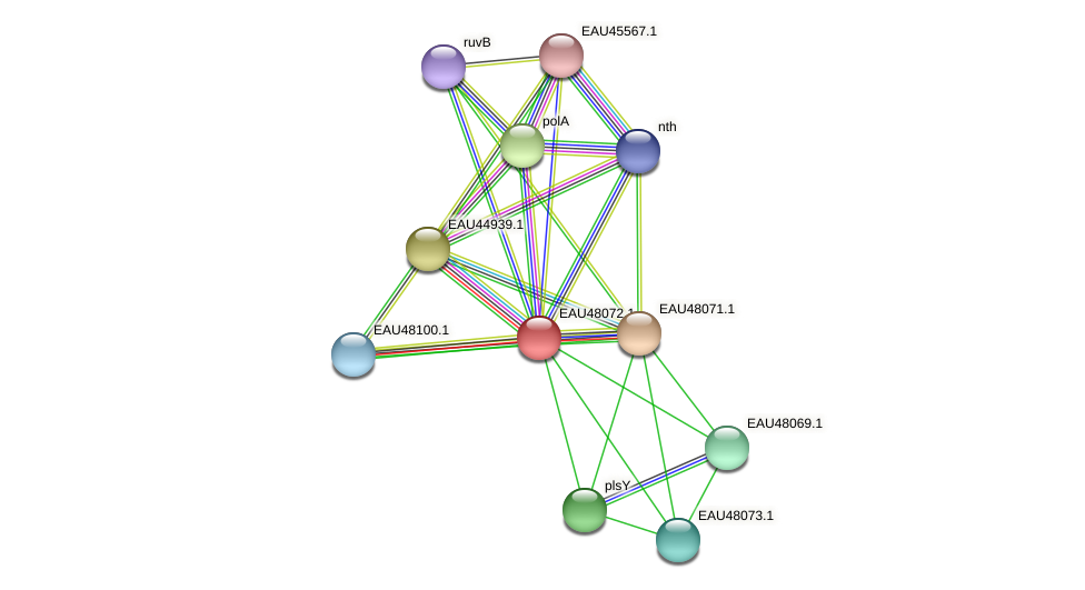 R2601_13940 protein (Pelagibaca bermudensis) - STRING interaction network