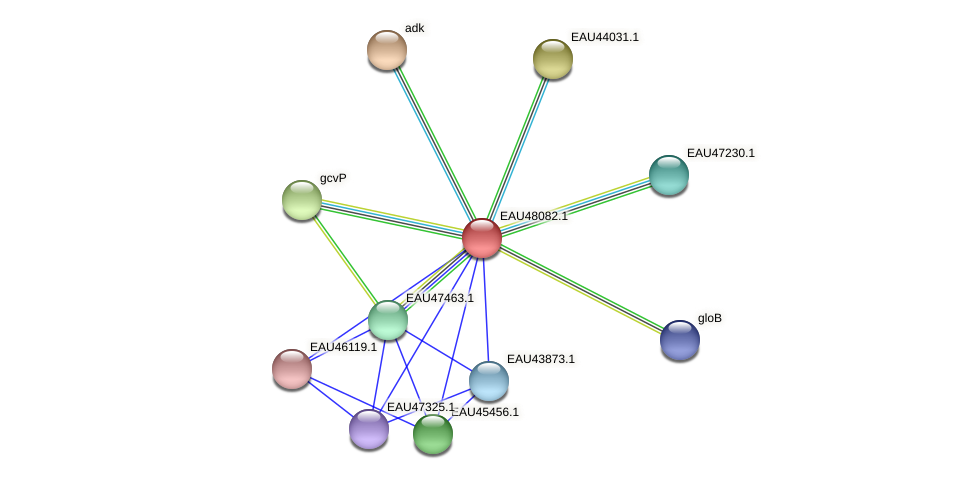 R2601_13990 protein (Pelagibaca bermudensis) - STRING interaction network