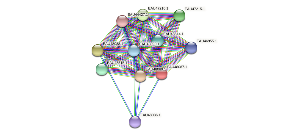 R2601_14015 protein (Pelagibaca bermudensis) - STRING interaction network